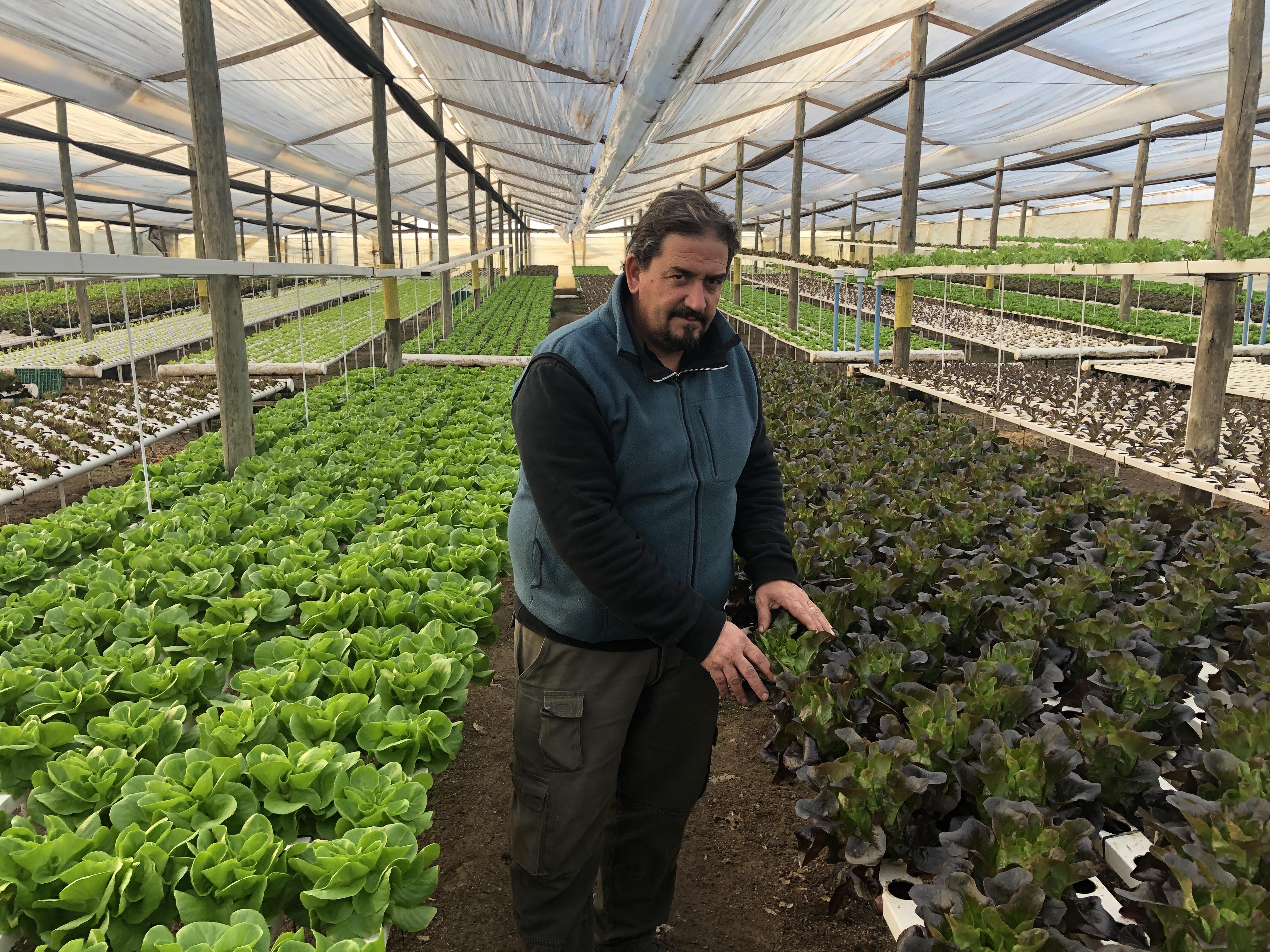 Grower Salanova Argentina